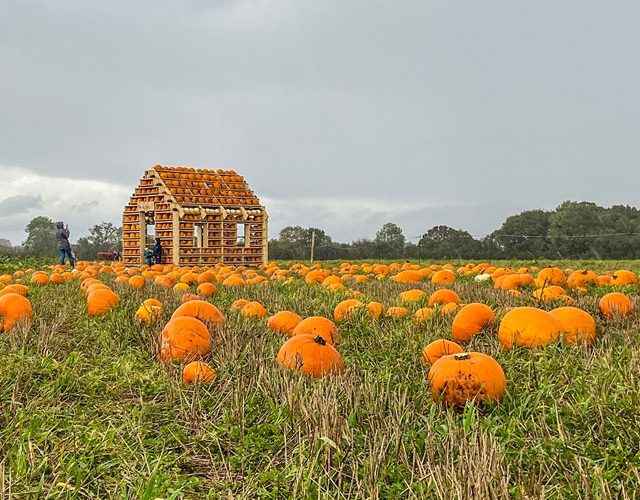 https://www.independentmk.co.uk/wp-content/uploads/2020/10/pumpkin-house-the-patch-mk-milton-keynes-640x500.jpg