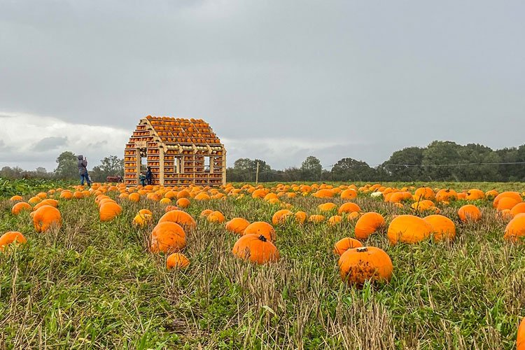 The Patch MK – Pick Your Own Pumpkins in Milton Keynes