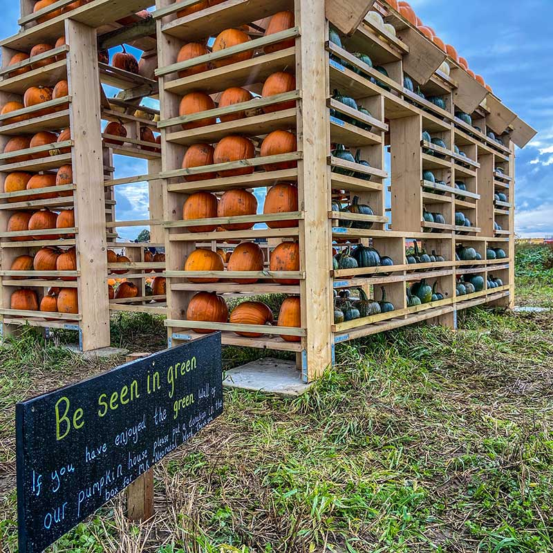 pumpkin house at the patch mk