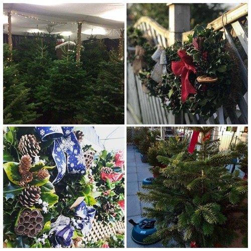 real christmas trees in milton keynes