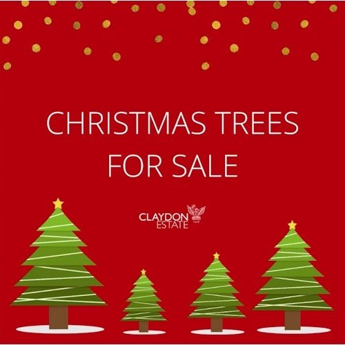 real Christmas trees for sale at Claydon Estate