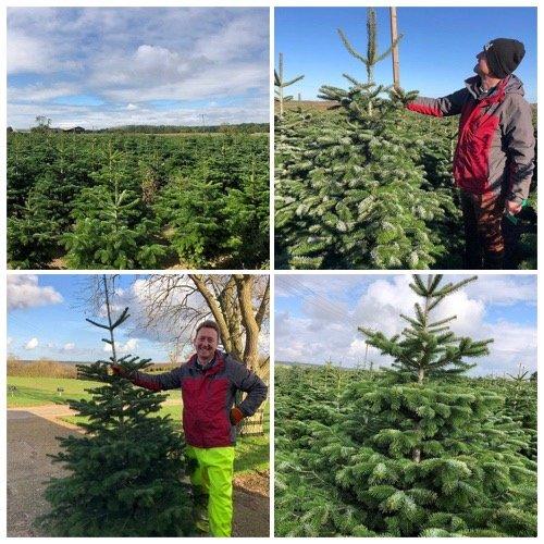 real christmas trees for sale at stoke goldington christmas trees near milton keynes